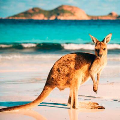 ws-estudios-en-el-exterior-australia-avistamiento-canguros